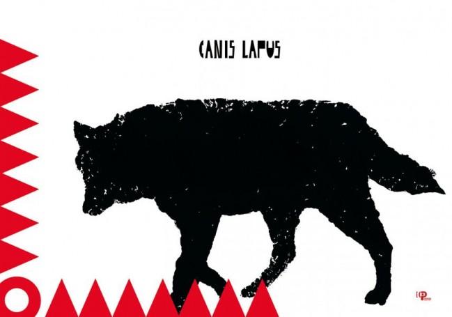 Canis lapus