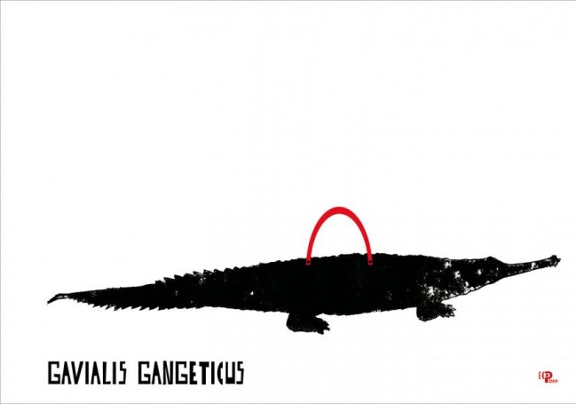 Gawialis gangeticus