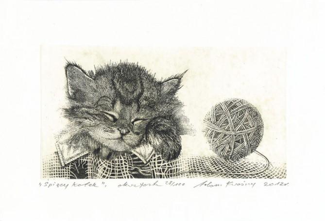 Adam Kwaśny, Śpiący kotek, 2012 r.