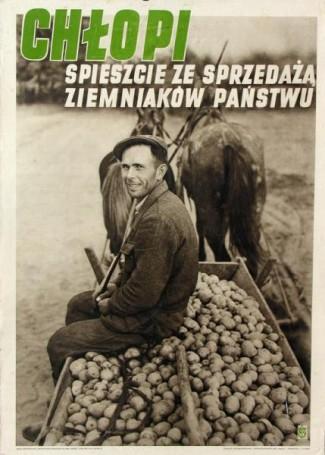 Chłopi, spieszcie zesprzedażą ziemniaków państwu, 1951 r.
