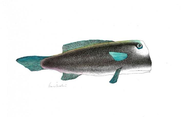Bez tytułu (Fish)