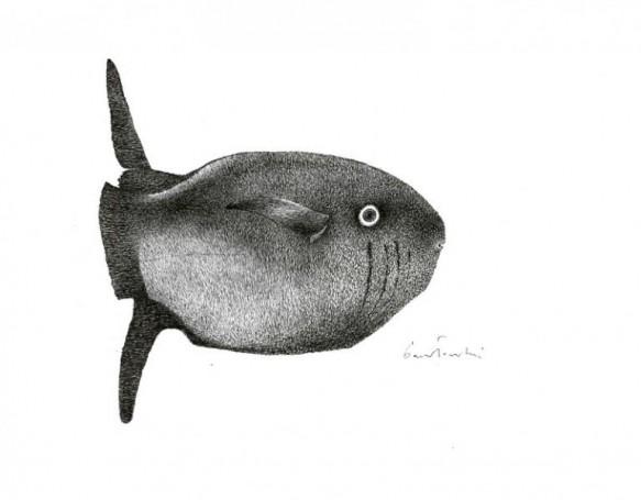 Bez tytułu (Ryba)