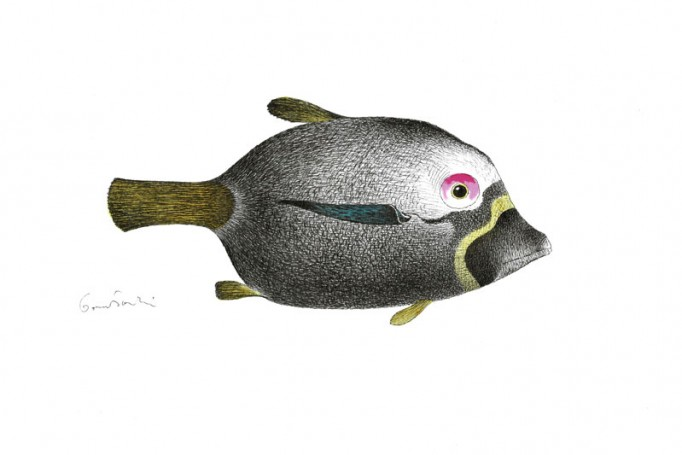 Untitled (Fish)