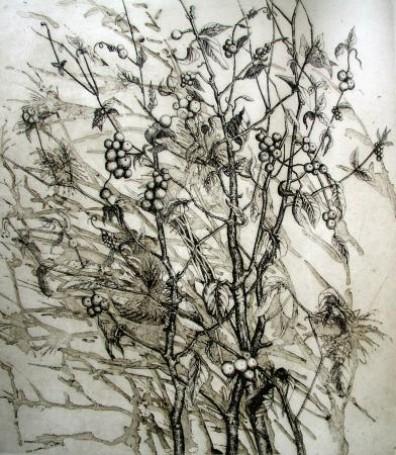 Wichrowy krzew, 2003