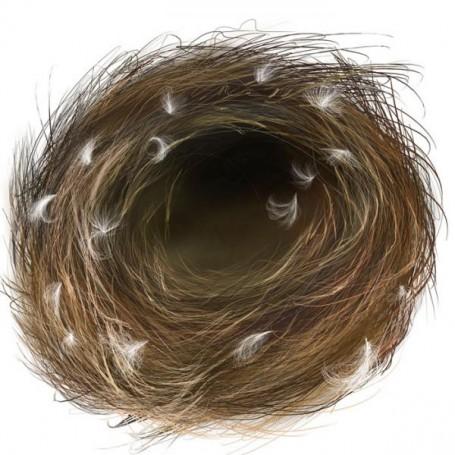 Nest II, 2005 r.