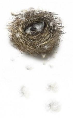 Nest, 2007