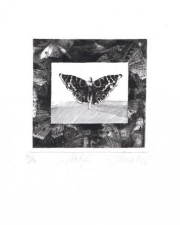 Motyl, 2004 r.