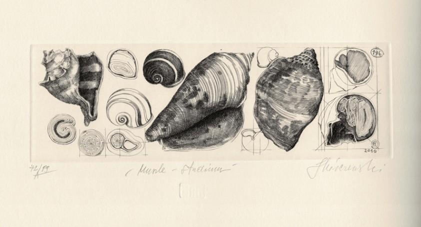 Shells, 2010