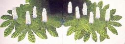 Planty kasztany