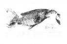 Fat fish, 2011