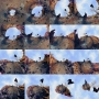 Bird Grid 16 Master, 2012 r.