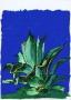 Kaktus 5, 1980 r.