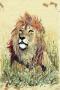 No title (Lion)