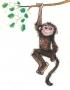 Małpka,