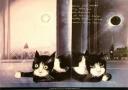 Józef Wilkoń, Koty