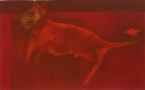 Bullterier, 1996