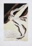 Edmund Piotrowicz, Bird flights I