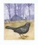 Marian Paweł Bocianowski, Early spring blackbird