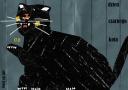 Dzień czarnego kota